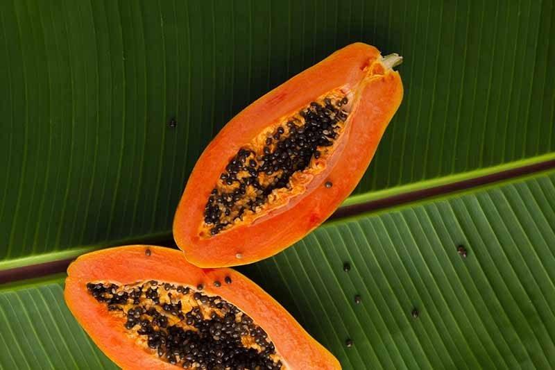 papaya soap ingredient